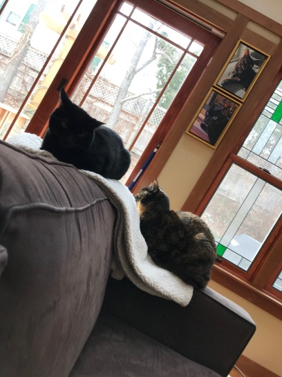 cats on sofa